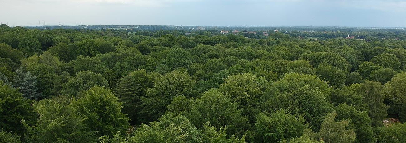 hauptfriedhof-gruene-lunge